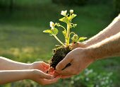 Father giving his daughter a plant