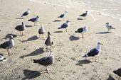 Seagulls on the Oregon Coast