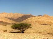Hiking in Negev Desert