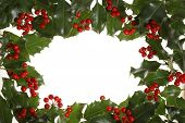 frame made of holly leaves and berries with white background