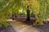 Lady walking down a path under a tree