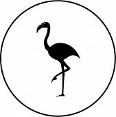flamingo bird symbol