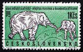 Postage Stamp Czechoslovakia 1962 African And Indian Elephants