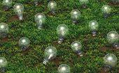 Cultivation Of Unlit Light Bulbs