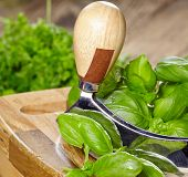 fresh and chopped herbs on cutting board