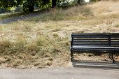 Empty park bench at park