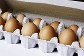 Closeup of eggs in carton