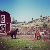 Instagram Of Miniature Ponies