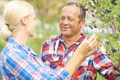picture of aronia  - Male and female gardeners talking by aronia tree - JPG