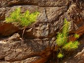Small Trees On Rock