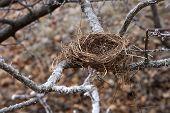 nest in winter