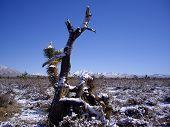 Mojave Desert In Snow