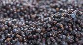 Dried Juniper Berries Background Image