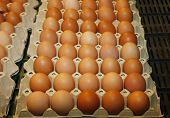 Farm fresh brown chicken eggs at farmers market