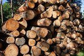 Pile Of Wood Logs