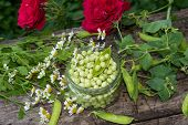 Canning Peas At Home, Outdoors