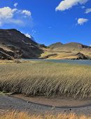 Windy day in the National Park Torres del Paine. Shallow blue lake overgrown tall reeds