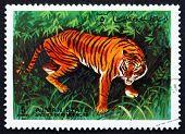 Postage Stamp Ajman 1972 Tiger, Pantera Tigris, Animal