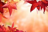 Autumn Bokeh Background With Red Leaves