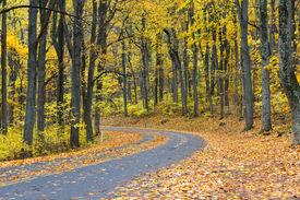 image of twisty  - Winding asphalt road with autumn foliage  - JPG