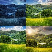 Collage of four scenic Pine Trees Near Meadow In Mountains