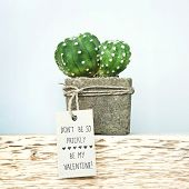 Happy Valentine's Day. Succulent In Concrete Pot With Tag Don't Be Prickly