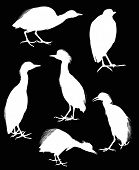illustration with six herons isolated on black background