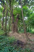 Jungle tree vines