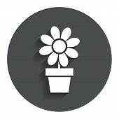 Flowers in pot sign icon. Bouquet of flowers.