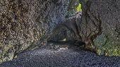 Lava caves at Waianapanapa state park