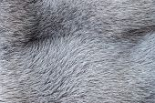 Abstract Texture Of A Fur Surface