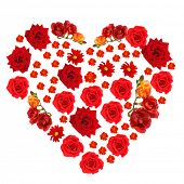 Beautiful flowers in shape of heart isolated on white