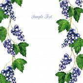 floral frame with black currants branches