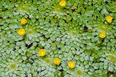 green leaf and yellow flowers