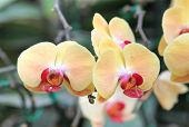 image of orquidea  - Beautiful Big orchid flower in the garden - JPG