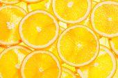 Colorful orange citrus fruit slices background backlit