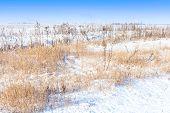 Snow Field Landscape