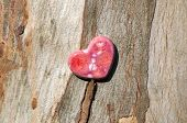 Pink Speckled Heart On Wood Bark