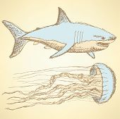 Sketch Shark And Jellyfish In Vintage Style