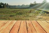 Rural Farm Field With Wooden