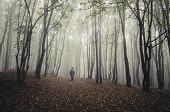 Man walking in fantasy forest with fog