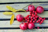 foto of ashes  - Ripe apples fruits of mountain ash yellow leaves on an old wooden bench - JPG
