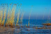 Curonian Bay Landscape