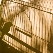 Canary. Bird In The Cage. Shadow On The Yellow Wall. Silence.