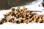 wooden logs under snow in forest