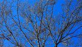 Blue Sky Branch background