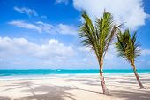Palm Trees Grow On Empty Sandy Beach. Dominican Republic