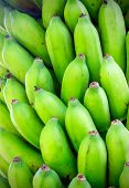 foto of bunch bananas  - Bunch of fresh green bananas closeup on dominican plantation - JPG