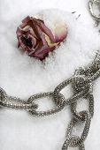 Costume jewellery and rose on ice in studio