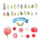 picture of laurel  - Watercolor flowers - JPG